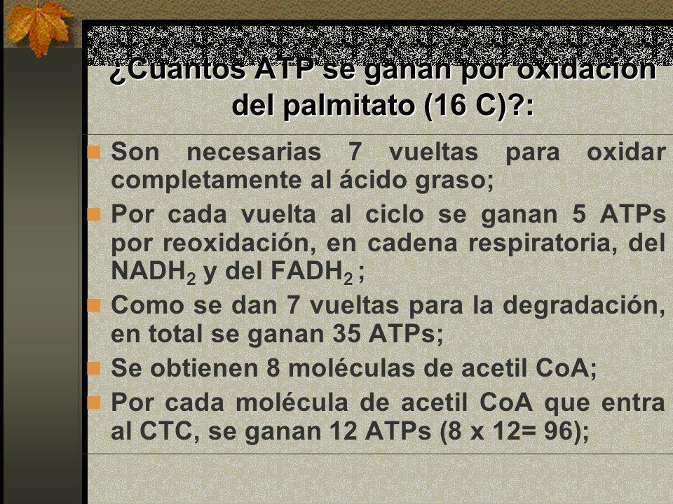 ¿Cuántos ATP se ganan por oxidación del palmitato (16 C)?: Son necesarias 7 vueltas para oxidar completamente al ácido graso; Por cada vuelta al ciclo