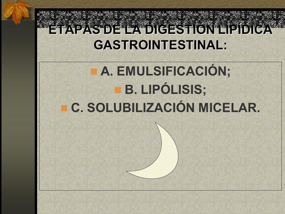 ETAPAS DE LA DIGESTIÓN LIPÍDICA GASTROINTESTINAL: A. EMULSIFICACIÓN; B. LIPÓLISIS; C. SOLUBILIZACIÓN MICELAR.