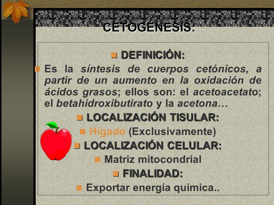 CETOGÉNESIS: CETOGÉNESIS: DEFINICIÓN: DEFINICIÓN: Es la síntesis de cuerpos cetónicos, a partir de un aumento en la oxidación de ácidos grasos; ellos