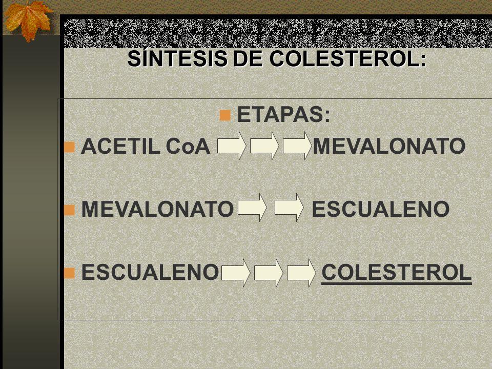 SÍNTESIS DE COLESTEROL: ETAPAS: ACETIL CoA MEVALONATO MEVALONATO ESCUALENO ESCUALENO COLESTEROL
