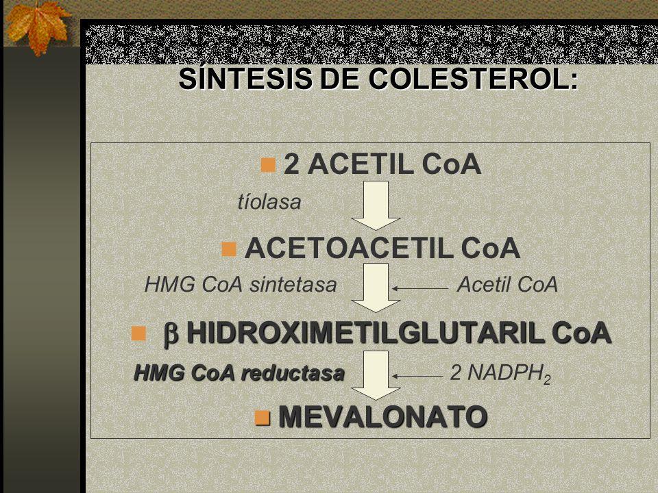 SÍNTESIS DE COLESTEROL: 2 ACETIL CoA ACETOACETIL CoA HIDROXIMETILGLUTARIL CoA HIDROXIMETILGLUTARIL CoA MEVALONATO MEVALONATO tíolasa HMG CoA sintetasa