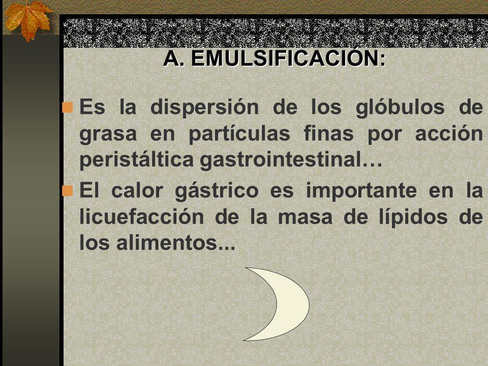 A. EMULSIFICACIÓN: Es la dispersión de los glóbulos de grasa en partículas finas por acción peristáltica gastrointestinal… El calor gástrico es import