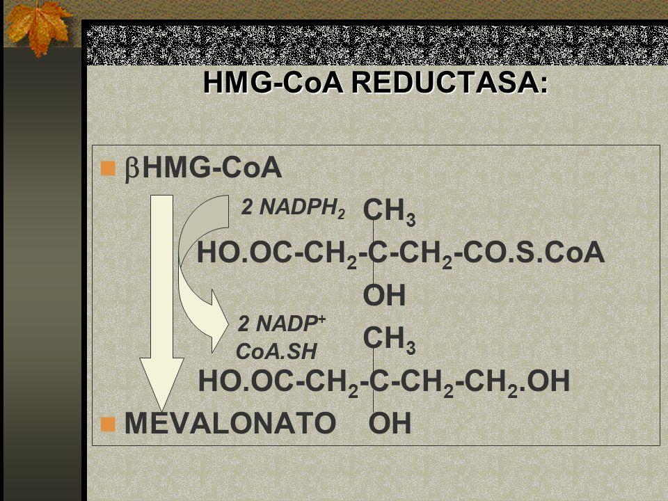 HMG-CoA REDUCTASA: HMG-CoA CH 3 HO.OC-CH 2 -C-CH 2 -CO.S.CoA OH CH 3 HO.OC-CH 2 -C-CH 2 -CH 2.OH MEVALONATO OH 2 NADPH 2 2 NADP + CoA.SH