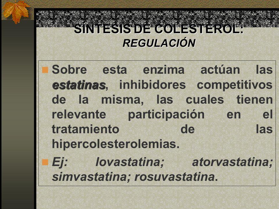 SÍNTESIS DE COLESTEROL: REGULACIÓN estatinas Sobre esta enzima actúan las estatinas, inhibidores competitivos de la misma, las cuales tienen relevante