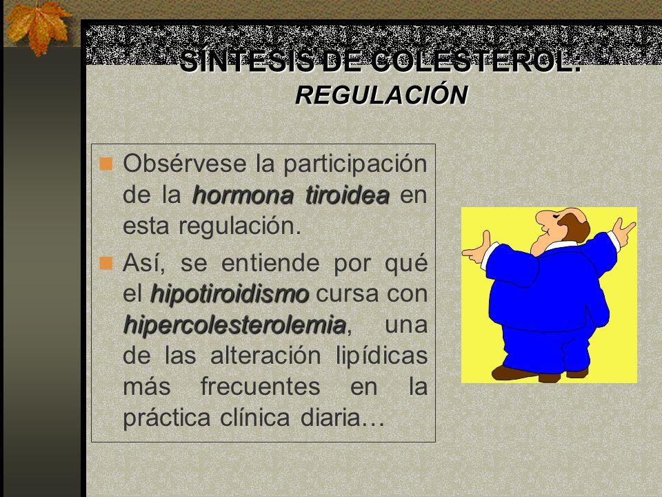 SÍNTESIS DE COLESTEROL: REGULACIÓN hormona tiroidea Obsérvese la participación de la hormona tiroidea en esta regulación. hipotiroidismo hipercolester