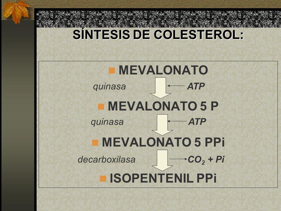 SÍNTESIS DE COLESTEROL: MEVALONATO MEVALONATO 5 P MEVALONATO 5 PPi ISOPENTENIL PPi ATP CO 2 + Pi decarboxilasa quinasa