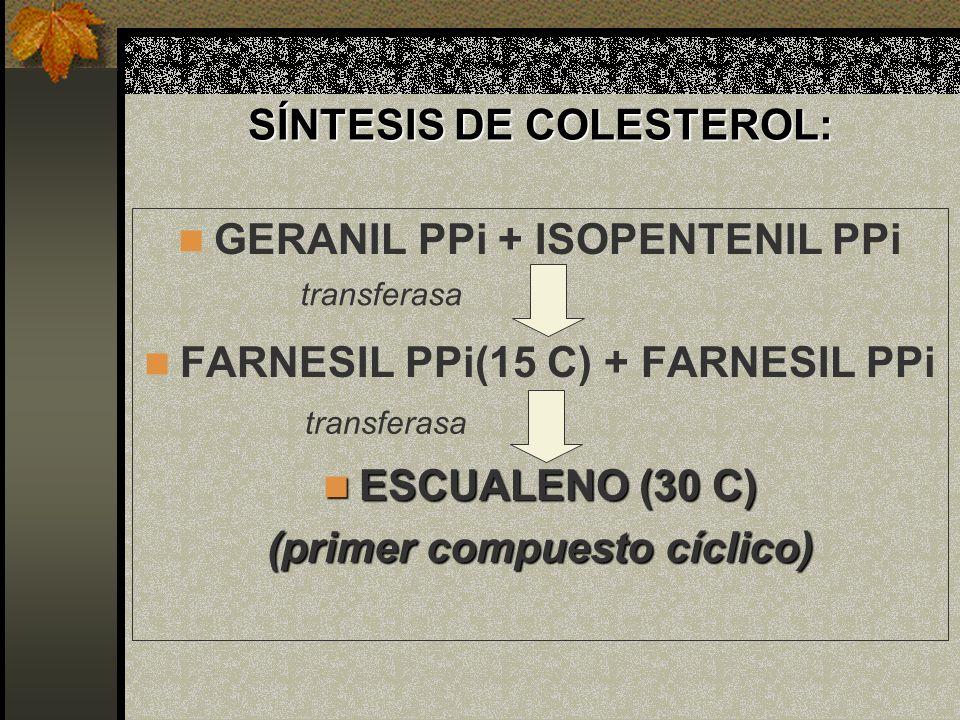 SÍNTESIS DE COLESTEROL: GERANIL PPi + ISOPENTENIL PPi FARNESIL PPi(15 C) + FARNESIL PPi ESCUALENO (30 C) ESCUALENO (30 C) (primer compuesto cíclico) t