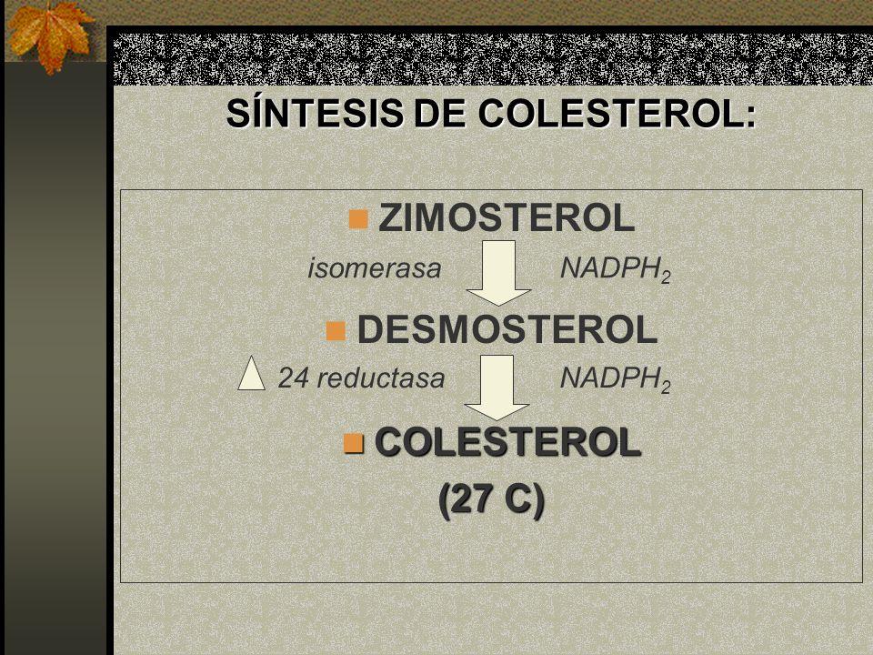 SÍNTESIS DE COLESTEROL: ZIMOSTEROL DESMOSTEROL COLESTEROL COLESTEROL (27 C) isomerasa 24 reductasa NADPH 2