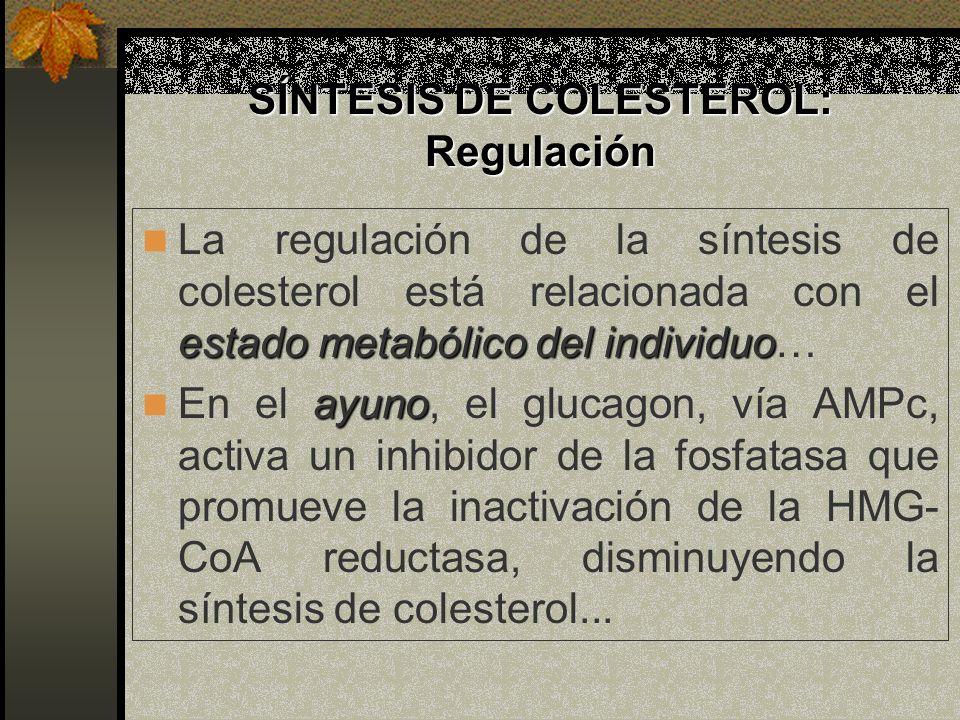 SÍNTESIS DE COLESTEROL: Regulación estado metabólico del individuo La regulación de la síntesis de colesterol está relacionada con el estado metabólic