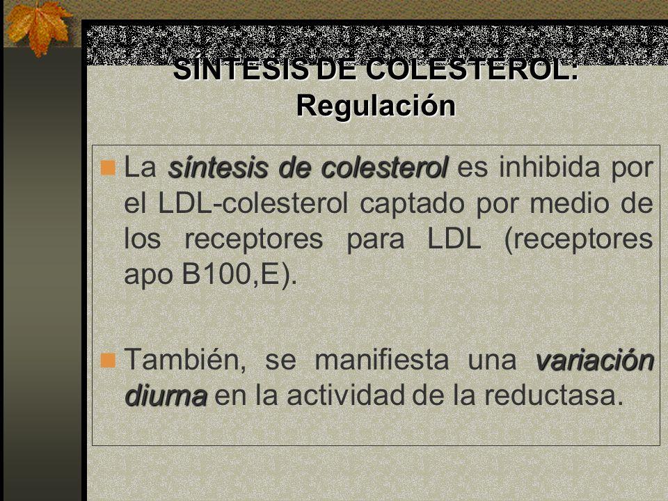 SÍNTESIS DE COLESTEROL: Regulación síntesis de colesterol La síntesis de colesterol es inhibida por el LDL-colesterol captado por medio de los recepto