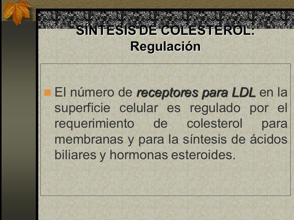 SÍNTESIS DE COLESTEROL: Regulación receptores para LDL El número de receptores para LDL en la superficie celular es regulado por el requerimiento de c