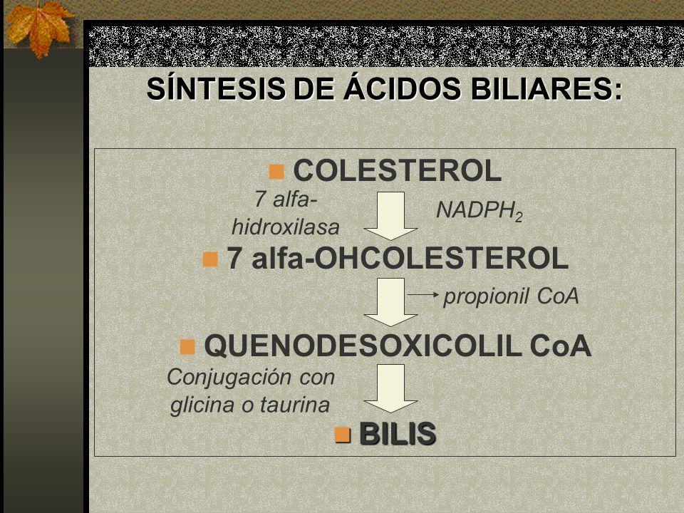 SÍNTESIS DE ÁCIDOS BILIARES: COLESTEROL 7 alfa-OHCOLESTEROL QUENODESOXICOLIL CoA BILIS BILIS Conjugación con glicina o taurina 7 alfa- hidroxilasa NAD