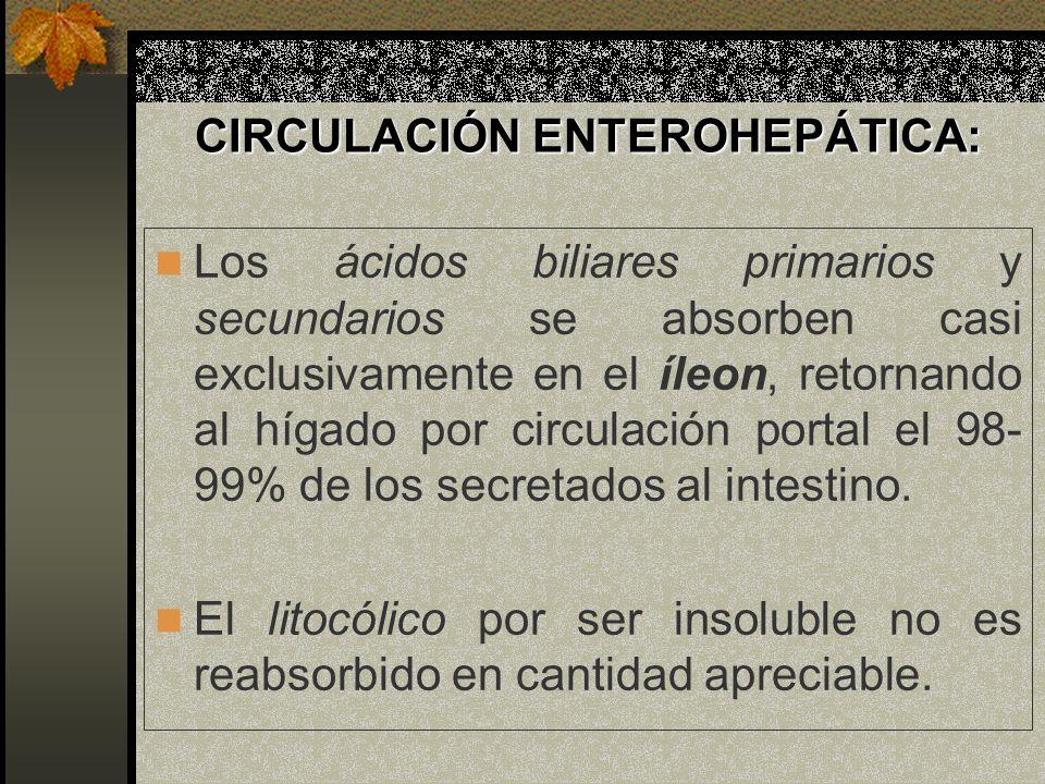 CIRCULACIÓN ENTEROHEPÁTICA: Los ácidos biliares primarios y secundarios se absorben casi exclusivamente en el íleon, retornando al hígado por circulac