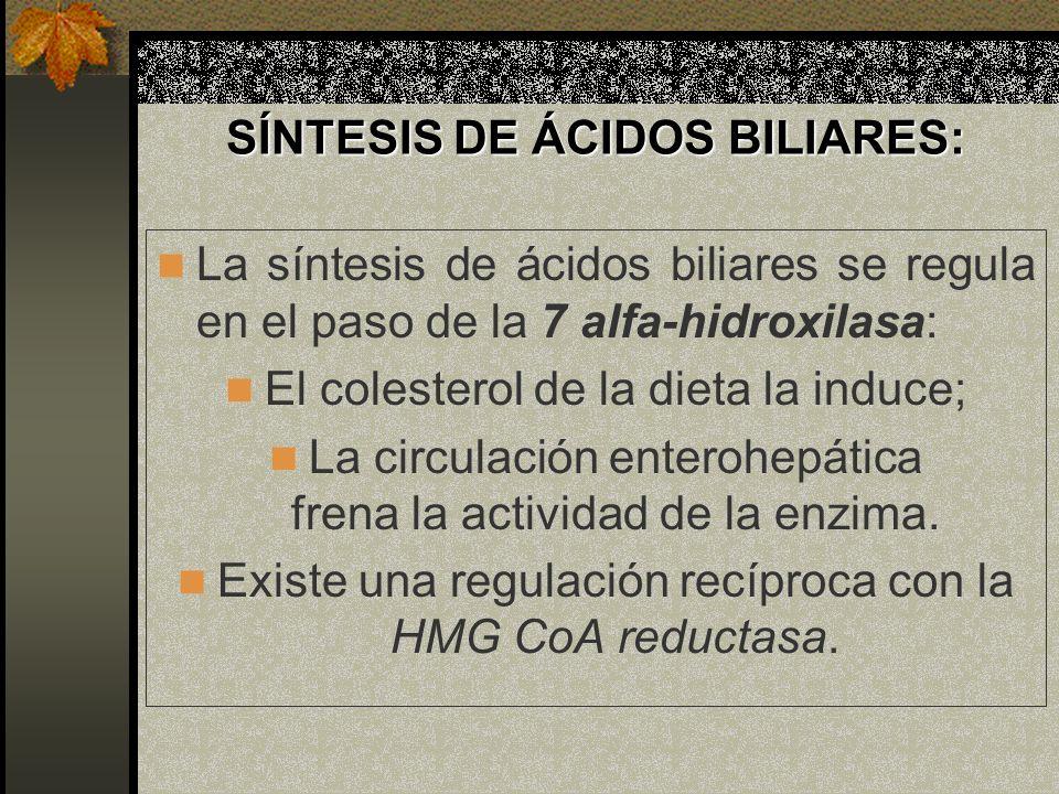 SÍNTESIS DE ÁCIDOS BILIARES: La síntesis de ácidos biliares se regula en el paso de la 7 alfa-hidroxilasa: El colesterol de la dieta la induce; La cir