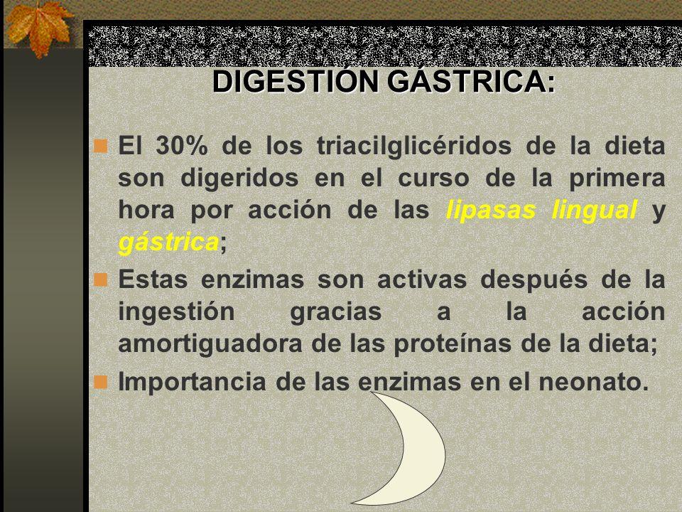 DIGESTIÓN GÁSTRICA: El 30% de los triacilglicéridos de la dieta son digeridos en el curso de la primera hora por acción de las lipasas lingual y gástr