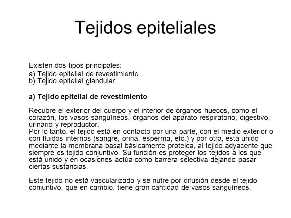 Tejidos epiteliales Existen dos tipos principales: a) Tejido epitelial de revestimiento b) Tejido epitelial glandular a) Tejido epitelial de revestimi