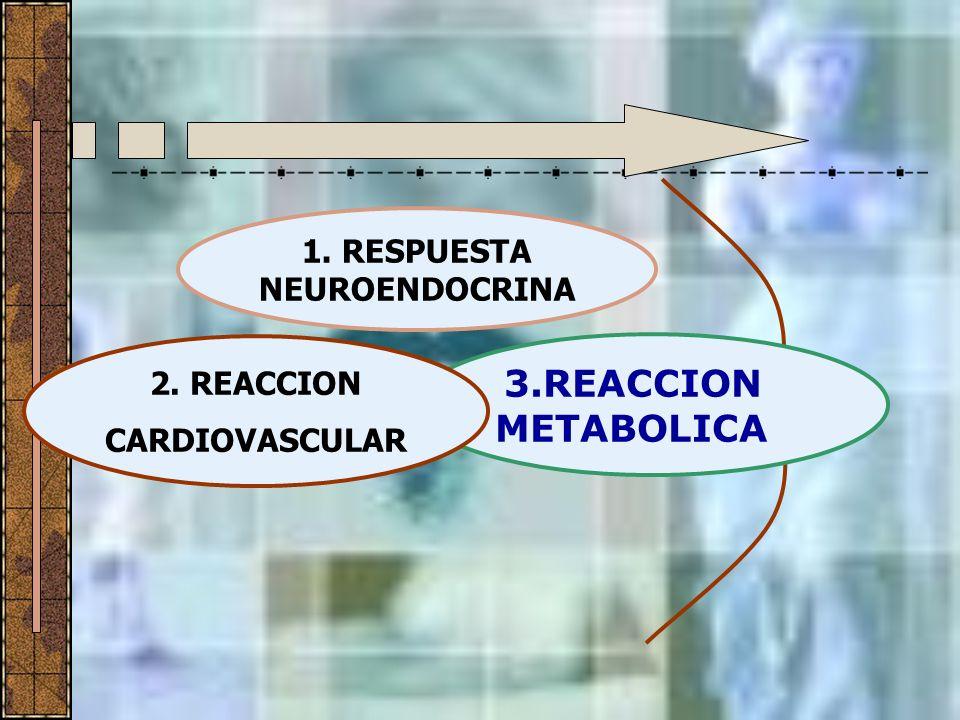 1. RESPUESTA NEUROENDOCRINA 3.REACCION METABOLICA 2. REACCION CARDIOVASCULAR