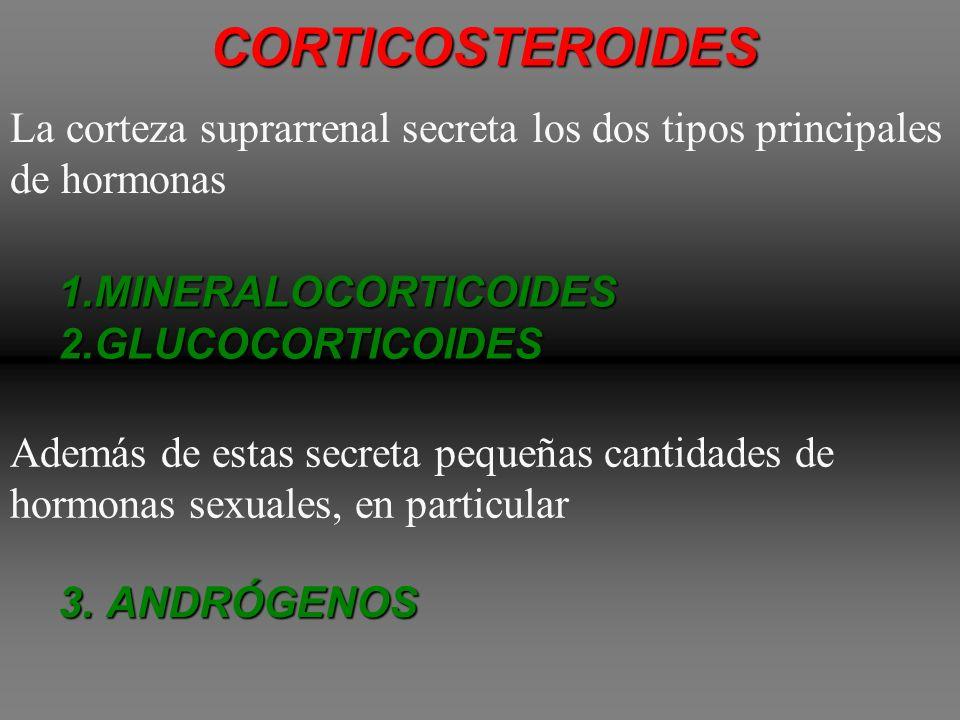 CORTEZASUPRARRENAL Secreta un grupo diferente de hormonas, llamadasCORTICOSTEROIDES COLESTEROL Todas estas hormonas, se sintetizan a partir del estero