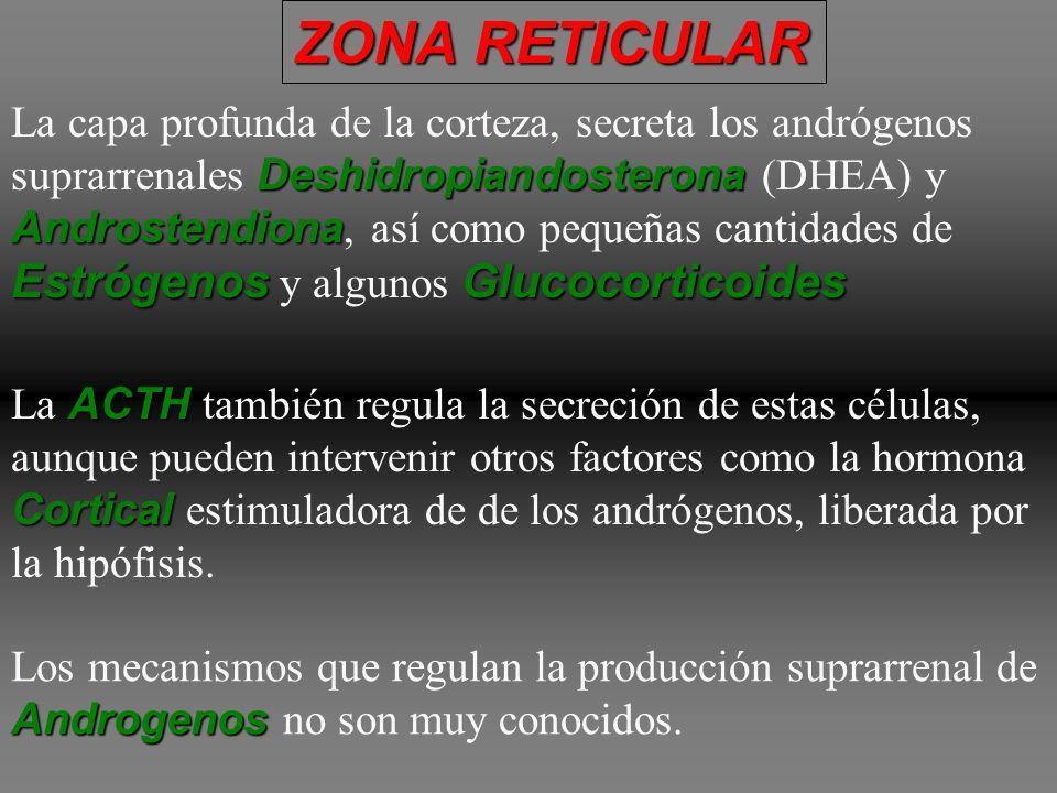 ZONA RETICULAR