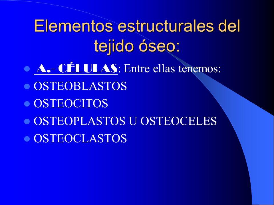 Funciones: FUNCIONES: Sirve de soporte a los tejidos blandos. Protege a órganos vitales como los contenidos en la caja craneana( el encéfalo),toráxica