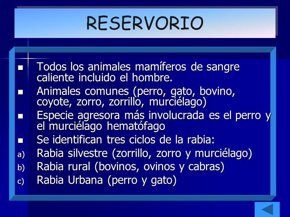 Todos los animales mamíferos de sangre caliente incluido el hombre. Todos los animales mamíferos de sangre caliente incluido el hombre. Animales comun