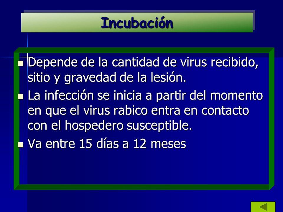 Depende de la cantidad de virus recibido, sitio y gravedad de la lesión. Depende de la cantidad de virus recibido, sitio y gravedad de la lesión. La i
