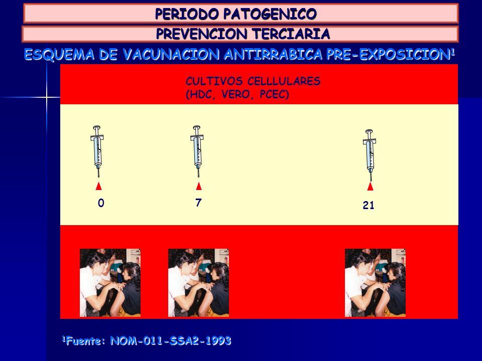 ESQUEMA DE VACUNACION ANTIRRABICA PRE-EXPOSICION 1 CULTIVOS CELLLULARES (HDC, VERO, PCEC) 07 21 1 Fuente: NOM-011-SSA2-1993 PREVENCION TERCIARIA PREVE