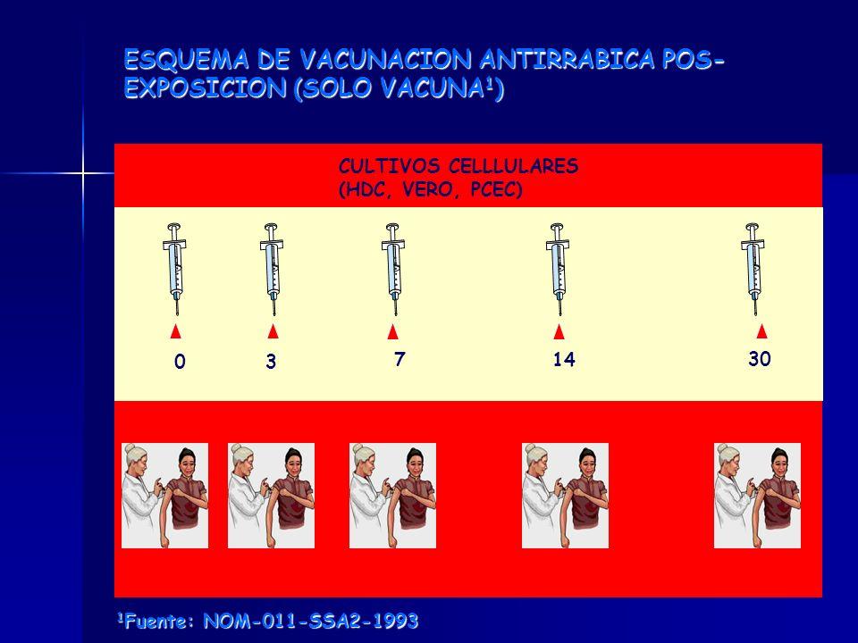 ESQUEMA DE VACUNACION ANTIRRABICA POS- EXPOSICION (SOLO VACUNA 1 ) CULTIVOS CELLLULARES (HDC, VERO, PCEC) 03 714 30 1 Fuente: NOM-011-SSA2-1993