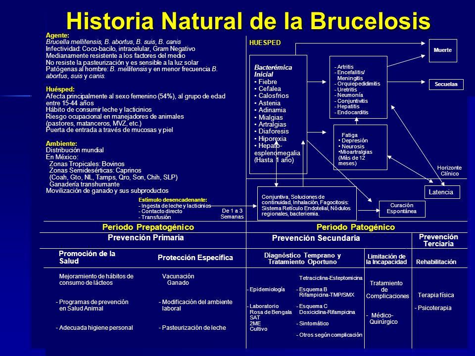 Historia Natural de la Brucelosis Agente: Brucella mellitensis, B. abortus, B. suis, B. canis Infectividad: Coco-bacilo, intracelular, Gram Negativo M
