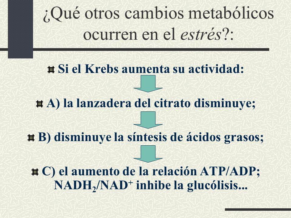 ¿Qué otros cambios metabólicos ocurren en el estrés?: Si el Krebs aumenta su actividad: A) la lanzadera del citrato disminuye; B) disminuye la síntesi