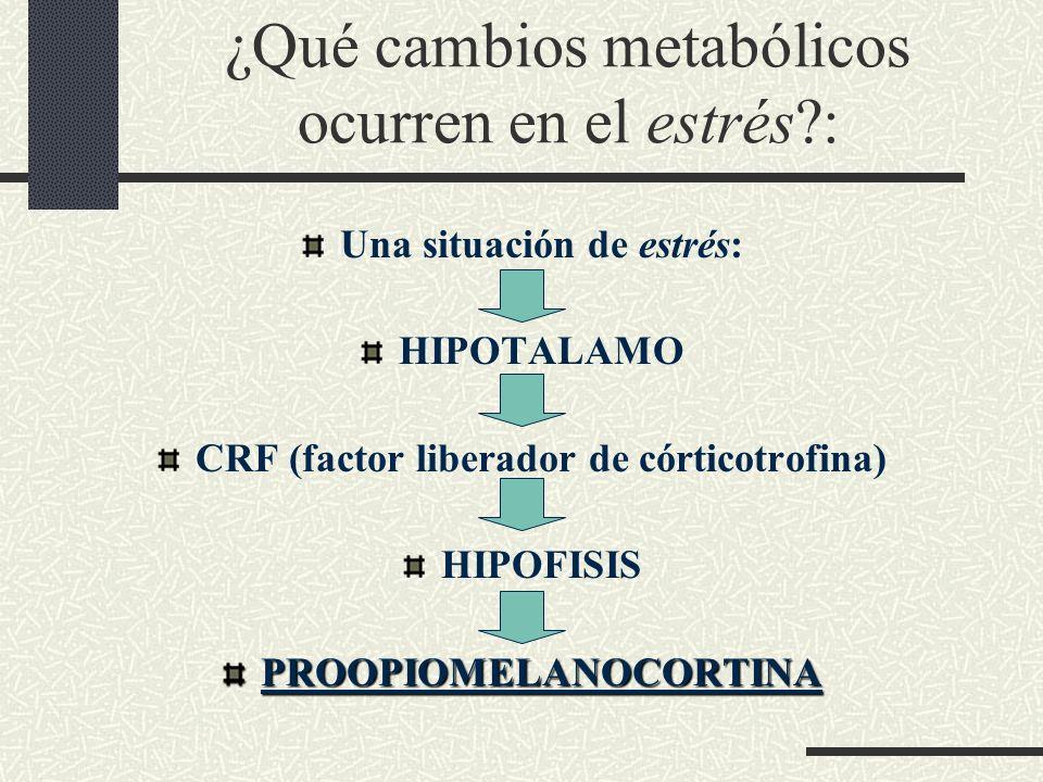 ¿Qué cambios metabólicos ocurren en el estrés?: Una situación de estrés: HIPOTALAMO CRF (factor liberador de córticotrofina) HIPOFISISPROOPIOMELANOCOR