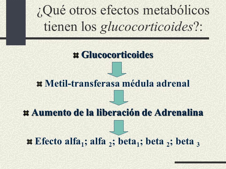 ¿Qué otros efectos metabólicos tienen los glucocorticoides?: Glucocorticoides Metil-transferasa médula adrenal Aumento de la liberación deAdrenalina A
