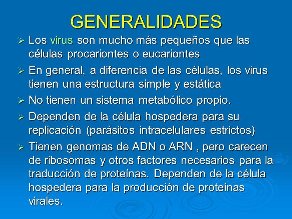 GENERALIDADES Los virus son mucho más pequeños que las células procariontes o eucariontes Los virus son mucho más pequeños que las células procarionte