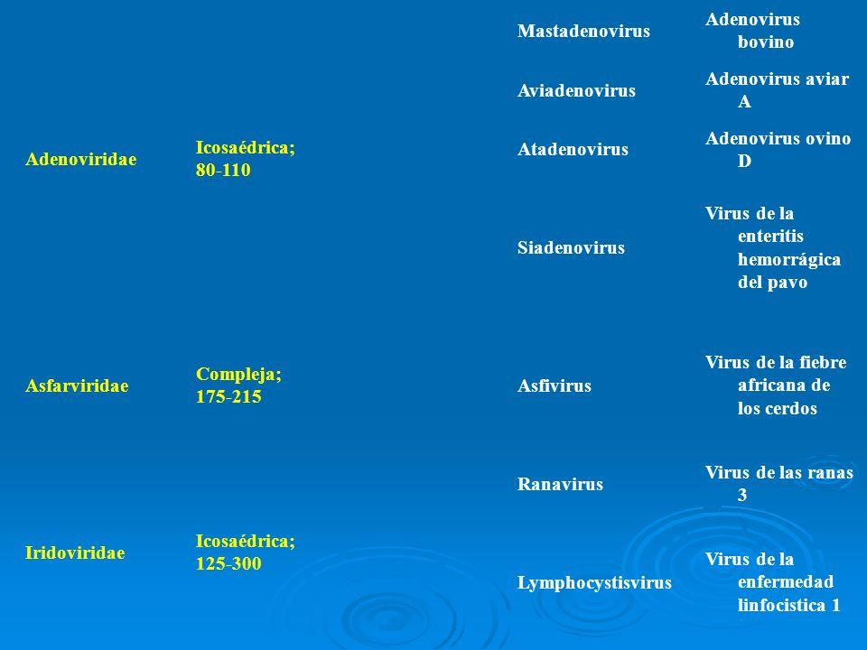 Adenoviridae Icosaédrica; 80-110 Mastadenovirus Adenovirus bovino Aviadenovirus Adenovirus aviar A Atadenovirus Adenovirus ovino D Siadenovirus Virus