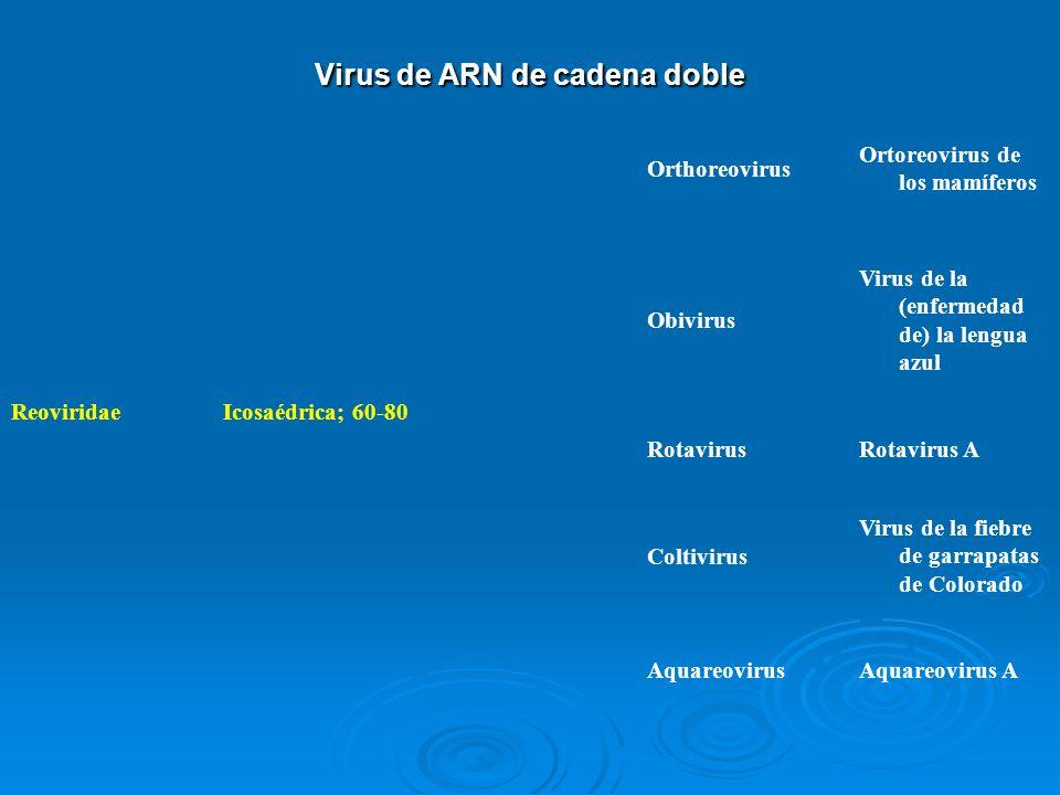 Virus de ARN de cadena doble ReoviridaeIcosaédrica; 60-80 Orthoreovirus Ortoreovirus de los mamíferos Obivirus Virus de la (enfermedad de) la lengua a