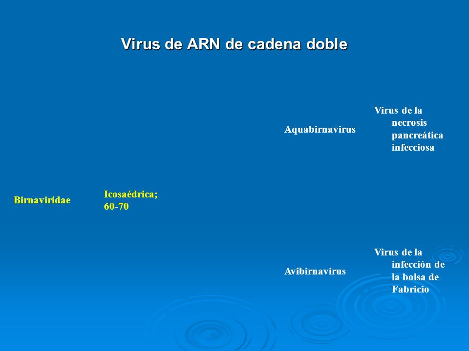 Virus de ARN de cadena doble Birnaviridae Icosaédrica; 60-70 Aquabirnavirus Virus de la necrosis pancreática infecciosa Avibirnavirus Virus de la infe