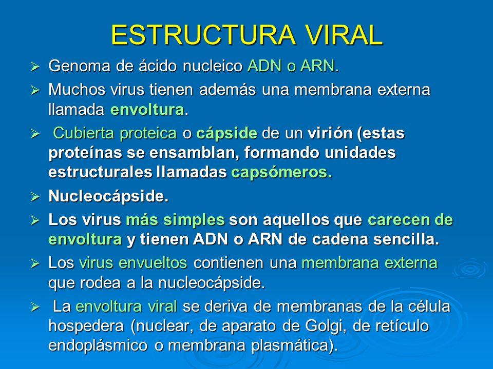 ESTRUCTURA VIRAL Genoma de ácido nucleico ADN o ARN. Genoma de ácido nucleico ADN o ARN. Muchos virus tienen además una membrana externa llamada envol