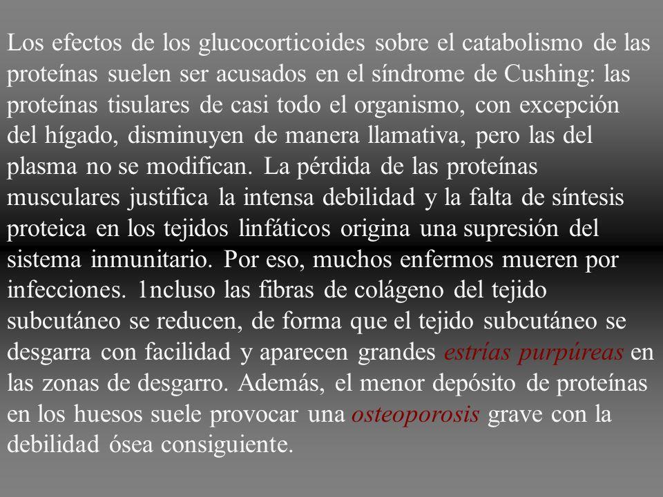 Los efectos de los glucocorticoides sobre el catabolismo de las proteínas suelen ser acusados en el síndrome de Cushing: las proteínas tisulares de ca