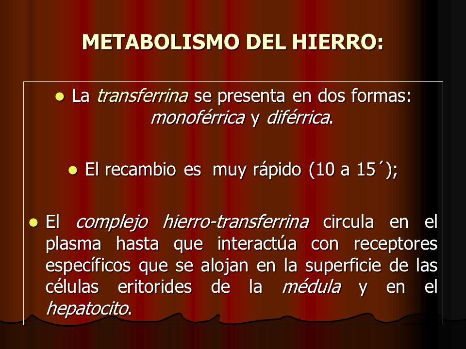 METABOLISMO DEL HIERRO: La transferrina se presenta en dos formas: monoférrica y diférrica. La transferrina se presenta en dos formas: monoférrica y d