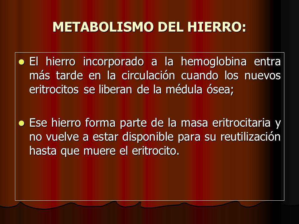 METABOLISMO DEL HIERRO: El hierro incorporado a la hemoglobina entra más tarde en la circulación cuando los nuevos eritrocitos se liberan de la médula