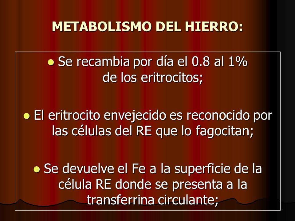 METABOLISMO DEL HIERRO: Se recambia por día el 0.8 al 1% de los eritrocitos; Se recambia por día el 0.8 al 1% de los eritrocitos; El eritrocito enveje