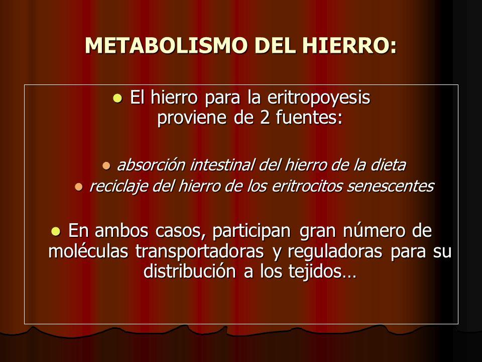 METABOLISMO DEL HIERRO: El hierro para la eritropoyesis proviene de 2 fuentes: El hierro para la eritropoyesis proviene de 2 fuentes: absorción intest