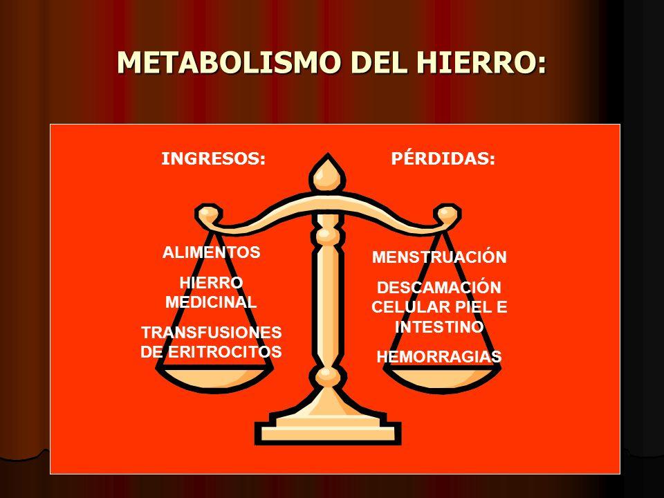 METABOLISMO DEL HIERRO: ALIMENTOS HIERRO MEDICINAL TRANSFUSIONES DE ERITROCITOS MENSTRUACIÓN DESCAMACIÓN CELULAR PIEL E INTESTINO HEMORRAGIAS INGRESOS