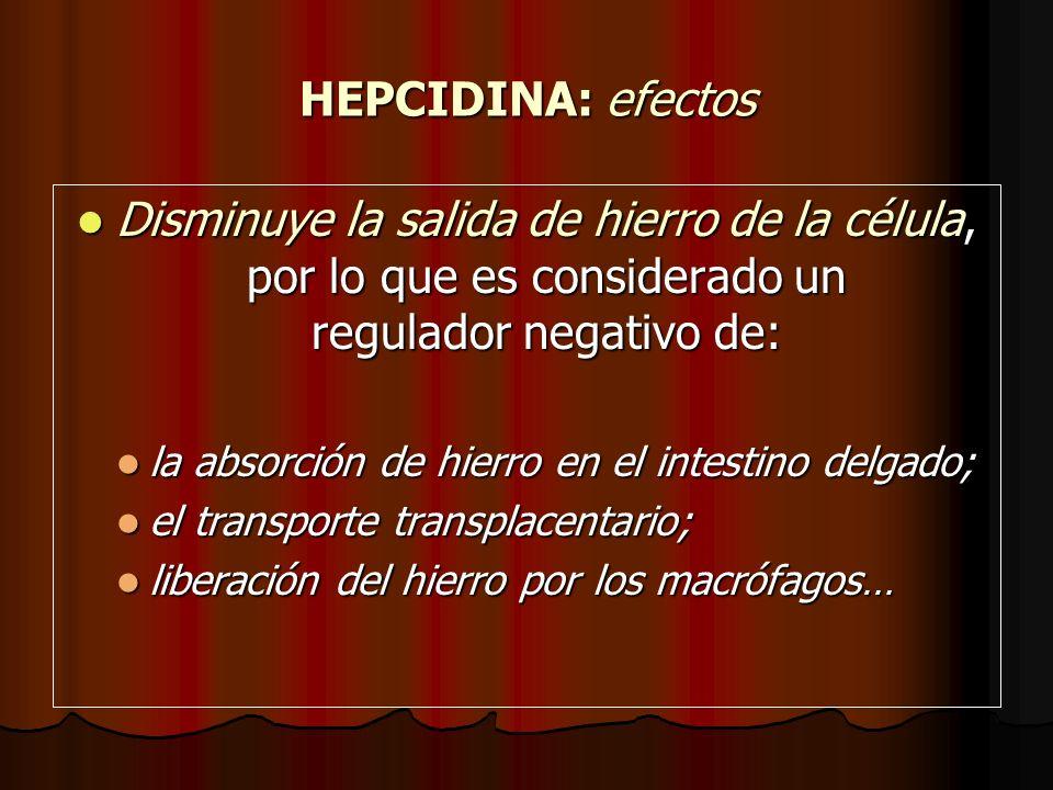 HEPCIDINA: efectos Disminuye la salida de hierro de la célula, por lo que es considerado un regulador negativo de: Disminuye la salida de hierro de la
