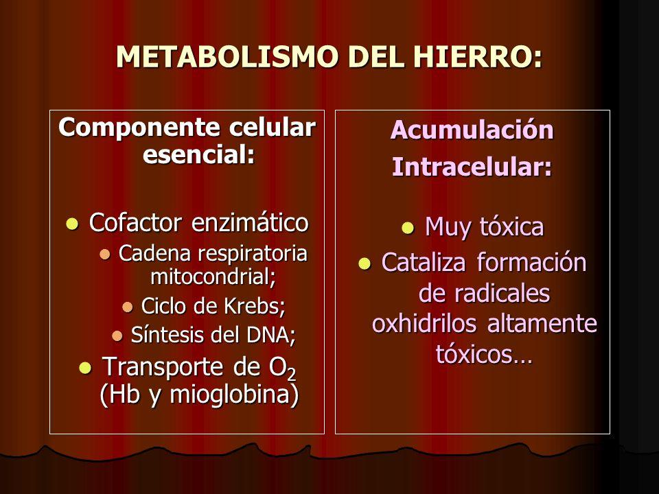 METABOLISMO DEL HIERRO: Componente celular esencial: Cofactor enzimático Cofactor enzimático Cadena respiratoria mitocondrial; Cadena respiratoria mit