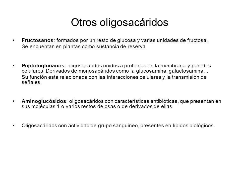 Otros oligosacáridos Fructosanos: formados por un resto de glucosa y varias unidades de fructosa. Se encuentan en plantas como sustancia de reserva. P