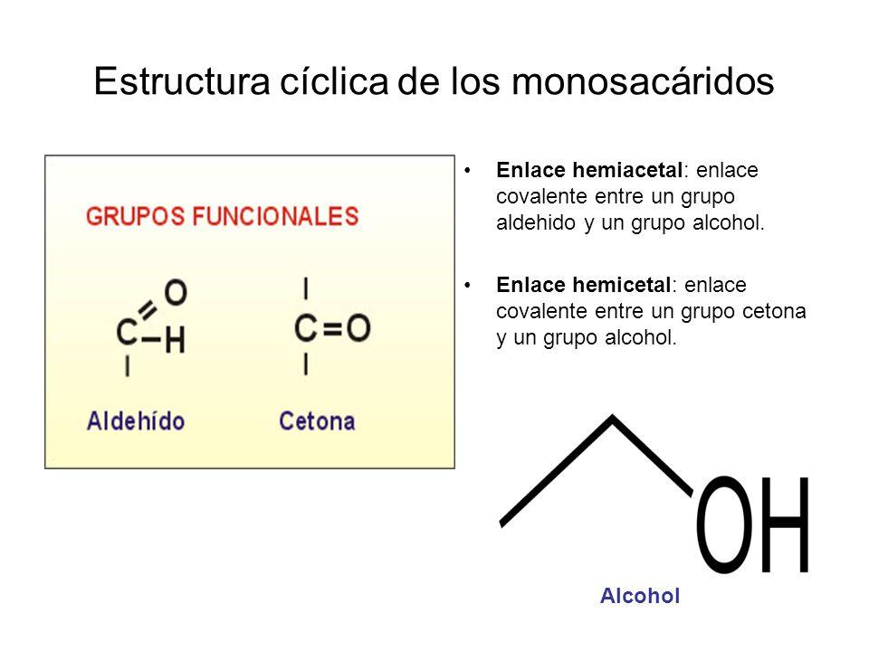 Estructura cíclica de los monosacáridos Enlace hemiacetal: enlace covalente entre un grupo aldehido y un grupo alcohol. Enlace hemicetal: enlace coval