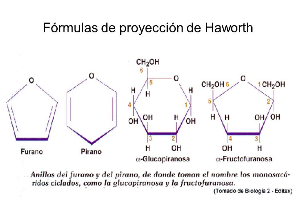 Fórmulas de proyección de Haworth