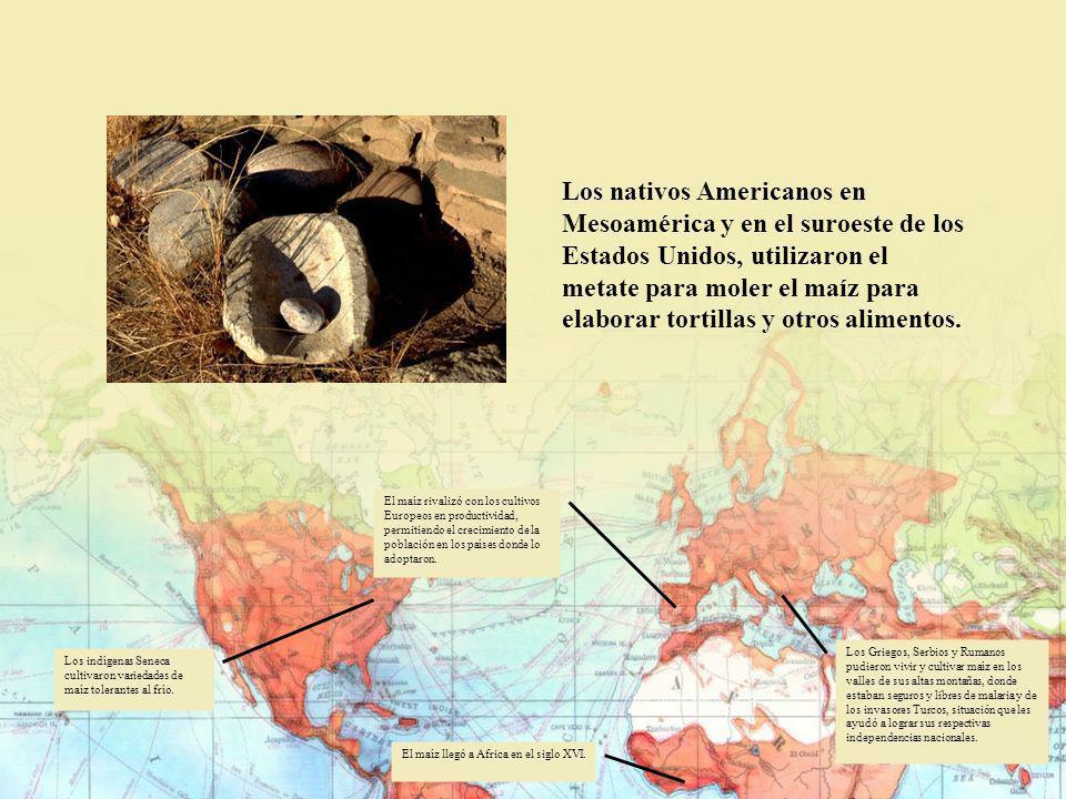 Los nativos Americanos en Mesoamérica y en el suroeste de los Estados Unidos, utilizaron el metate para moler el maíz para elaborar tortillas y otros