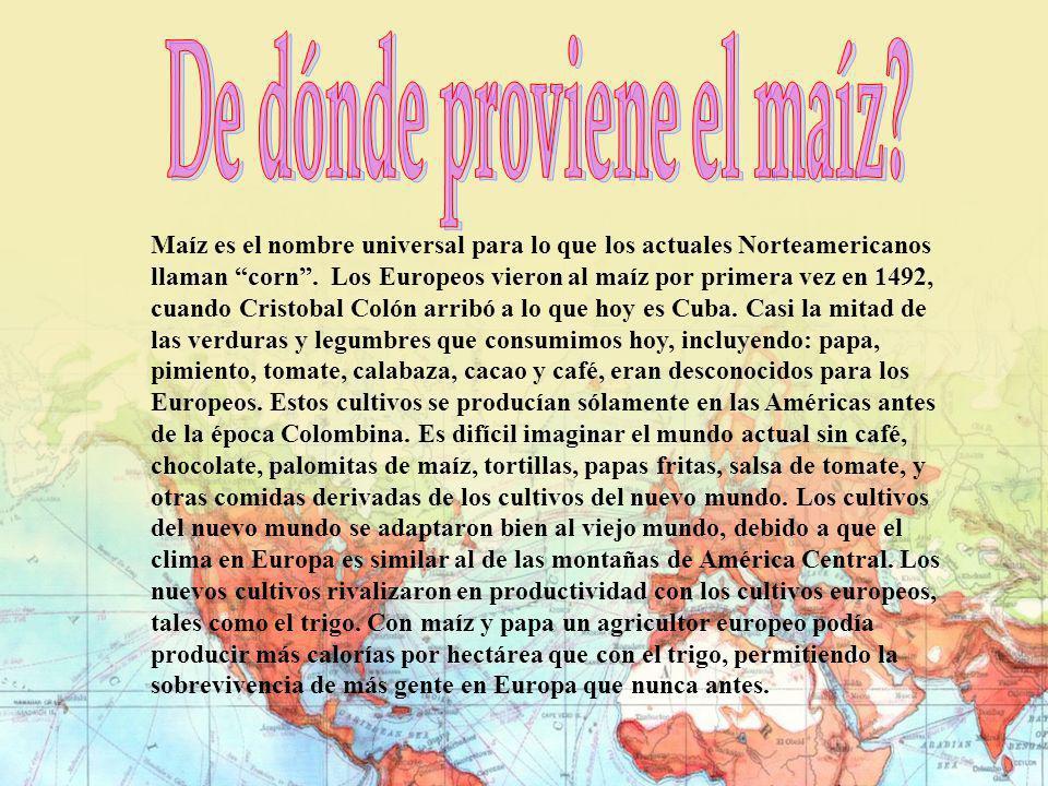 Maíz es el nombre universal para lo que los actuales Norteamericanos llaman corn. Los Europeos vieron al maíz por primera vez en 1492, cuando Cristoba
